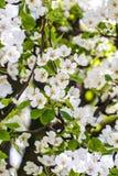 Het patroon van de lente royalty-vrije stock afbeeldingen
