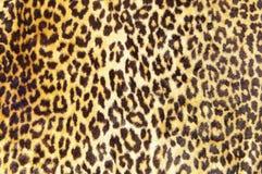Het patroon van de luipaard Stock Fotografie