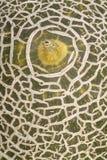 Het Patroon van de meloen Royalty-vrije Stock Afbeelding