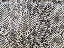 Het patroon van de slang Stock Foto's