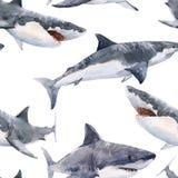 Het patroon van de waterverfhaai stock illustratie