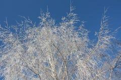 Het patroon van de winter op de bevroren boom Stock Fotografie