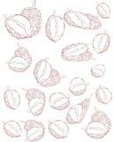 Het patroon van het Durianfruit vector illustratie