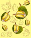 Het patroon van het Durianfruit stock illustratie