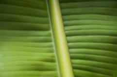Het patroon van het banaanblad Royalty-vrije Stock Foto