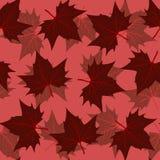 Het patroon van het esdoornblad Royalty-vrije Stock Afbeeldingen