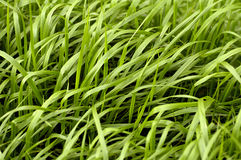 Het patroon van het gras Royalty-vrije Stock Foto's