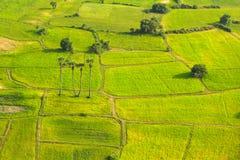 Het patroon van het landbouwbedrijf Royalty-vrije Stock Foto's