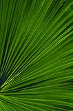 Het Patroon van het palmblad Stock Foto's