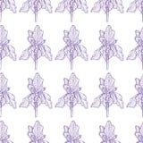 Het patroon zacht purple van de bloemiris stock illustratie
