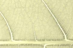 Het patroonachtergrond van de bladtextuur voor grafisch ontwerp Royalty-vrije Stock Foto