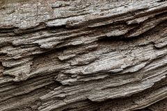 Het patroonachtergrond van de boomboomstam stock foto