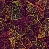 Het patroonachtergrond van de herfst transparante bladeren Royalty-vrije Stock Foto's