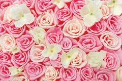 Het patroonachtergrond van de rozenbloem Bloemen textuur Stock Foto