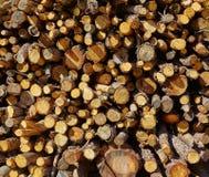 Het patroontextuur van de brandhoutbrand wook Stock Fotografie