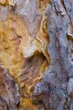 Het pellen Schors Houten Textuur Als achtergrond Royalty-vrije Stock Foto's