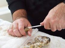 Het pellen van een oester Royalty-vrije Stock Afbeelding