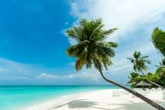 Het perfecte tropische strand van het eilandparadijs Stock Afbeeldingen