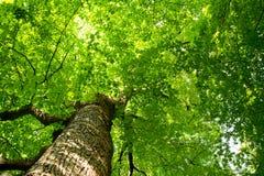 Het perspectief van de kikker in het hout Stock Fotografie