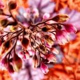 Het perspectiefbloemen van oogspelen stock afbeeldingen