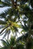 Het perspectiefmening van kokosnotenpalmen, Landschap in eiland Stock Afbeelding