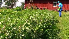 Het pesticide van de landbouwersnevel op boon plant dichtbij landelijk huis stock video
