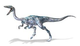 Het Photorealistic 3 D teruggeven van een Coelophysis. royalty-vrije illustratie