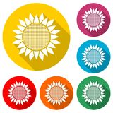 Het pictogram van het zonnebloemsymbool, kleurenpictogram met lange schaduw Stock Fotografie