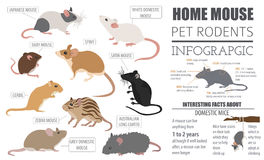 Het pictogram vastgestelde vlakke stijl van muizenrassen op wit Muisknaagdieren Royalty-vrije Stock Afbeeldingen