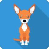 Het pictogram vlak ontwerp van hondchihuahua Stock Foto