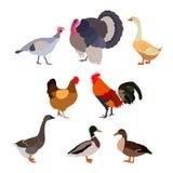 Het pictogramlandbouwbedrijf van gevogeltevogels stock foto's