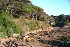 Het pijnboomhout en coved stranden Stock Foto