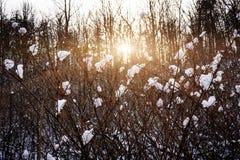 Het plaatsen van zon in de winterbos stock afbeelding