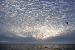 Het plaatsen van zon over de vreedzame oceaan toont een eenzame meeuw Royalty-vrije Stock Foto