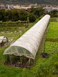 Het Plantaardige Groeien van de Serre van Polytunnel Stock Foto's