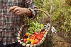 Het plantaardige plukken, verse groenten in een mand Royalty-vrije Stock Afbeeldingen