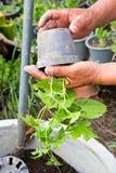Het planten royalty-vrije stock fotografie