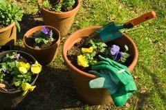 Het planten Stock Foto