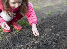 Het planten in de tuin - handen die zaden houden Vruchtbare grond van een opgeheven bedtuin voor een de lentegewas concepten groe stock afbeeldingen