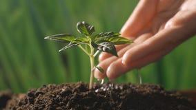 Het planten en het water geven boomspruit stock footage