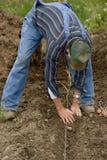 Het planten van aardappels 1 stock foto