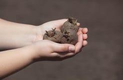 Het planten van aardappels in zijn handen Royalty-vrije Stock Afbeelding