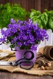 Het planten van bloemen stock afbeeldingen