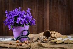 Het planten van bloemen royalty-vrije stock afbeelding