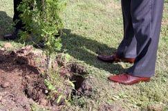 Het planten van Bomen Stock Afbeelding