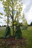 Het planten van bomen in de stad stock foto