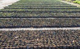 Het planten van boom in het perceel Royalty-vrije Stock Fotografie
