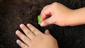 Het planten van boom, spruit, zaailing stock footage