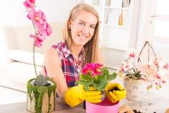 Het planten van colorfull bloem in een bloempot Stock Foto