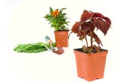 Het planten van de lente Stock Foto